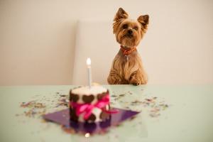 Nicht jede Abmahnung wegen unerlaubter Hundehaltung in der Mietwohnung ist auch rechtens.