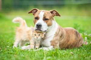 Die Abmahnung wegen unerlaubter Hundehaltung muss auf nachweisbaren Beschwerden beruhen.